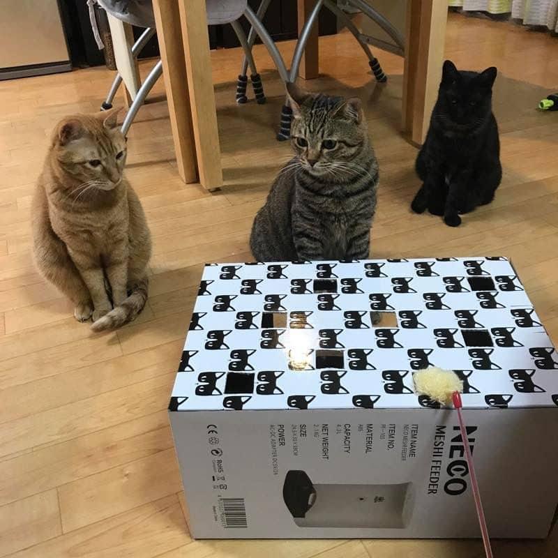 「猫もぐら叩きボックス」に早速集まるニャンズ